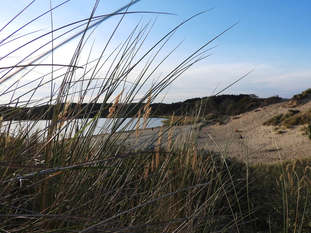 lake in the dunes by marijbar