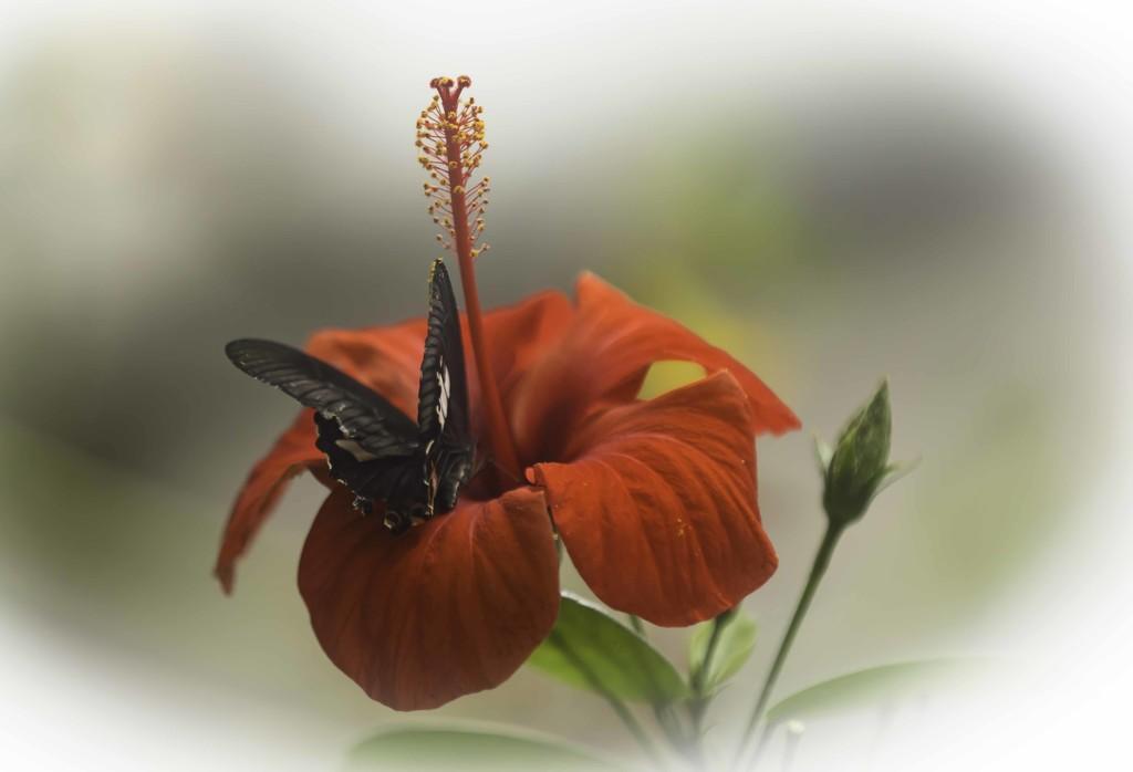 Butterfly by shepherdmanswife