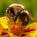 The Last Pollen