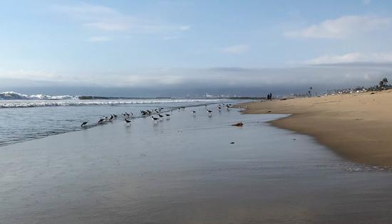 Dockweiler Beach by loweygrace