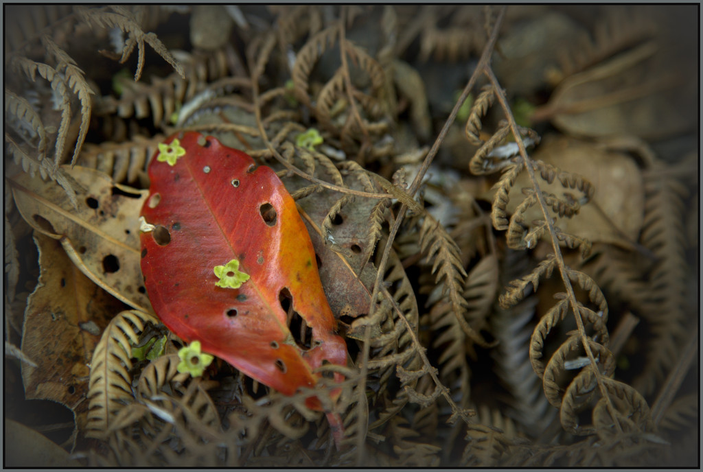 The leaf by dide