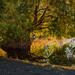 Winthrop Tree Reflection
