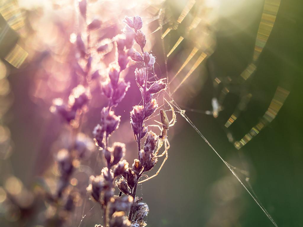 In the autumn sun by haskar