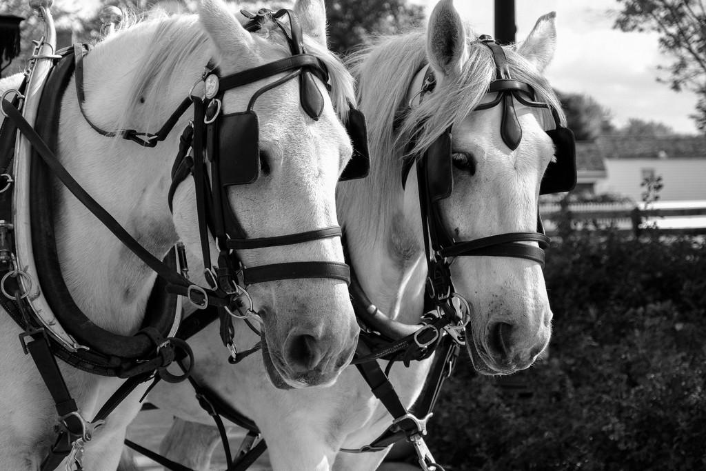 I don't like horses.... by vera365