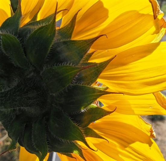 14-08 sunshine by tstb13