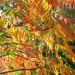 My garden in autumn colors