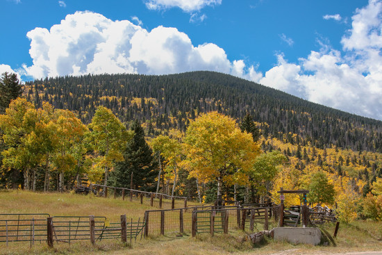Fall Color Cucharas Pass, Colorado by fntngrma