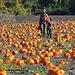 Pumpkin Patch time