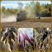 Beans Harvest by farmreporter