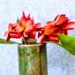 GardenRed Plumeria Champa Flowers