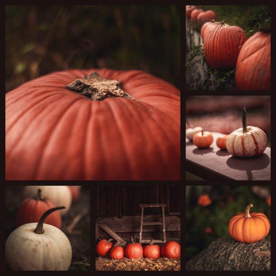 Pumpkin by adi314