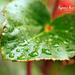Between the Rains