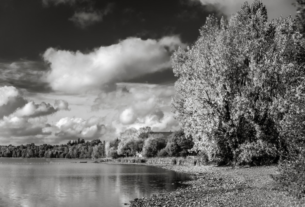 Paimpont 2018: Day 208 - Paimpont Lake... by vignouse