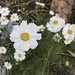 Blooming Away 1
