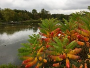 17th Oct 2018 - Autumn Colours at Pensthorpe