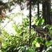 sparrow visits the garden