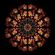 18th Oct 2018 - 2018-10-18 autumn kaleidoscope