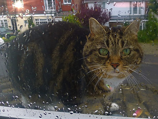Cat On A Wet Tiled Roof by 30pics4jackiesdiamond