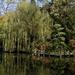 willow boardwalk