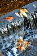 18th Oct 2018 - Autumn leaves in water.
