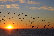 19th Oct 2018 - ...and then at sunrise the pigeons flew off!