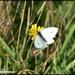 Still some butterflies about