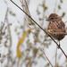 sparrow landscape