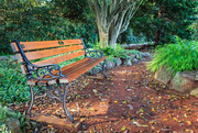 19th Oct 2018 - An inviting bench at the park.