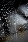 19th Oct 2018 - Spider Web