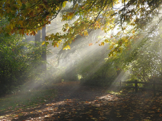 Afternoon Sunrays  by seattlite