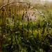 Nature's Chandelier