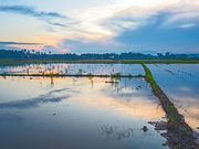 16th Oct 2018 - Blue Ten Minutes Rice Paddy
