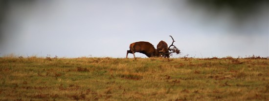 The Rut (Take One) by phil_sandford