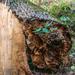 2018-10-20 Photography Retreat Wood Textures