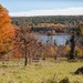 Ross Farm View