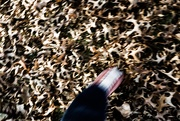 21st Oct 2018 - Crunching autumn leaves