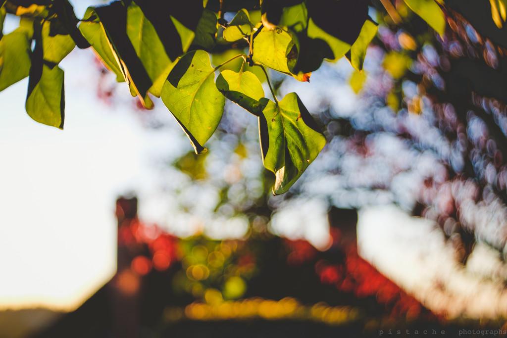 autumn lights by pistache