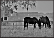 21st Oct 2018 - Horses in the morning