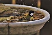 22nd Oct 2018 - great tit III