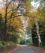 20th Oct 2018 - Winding country road