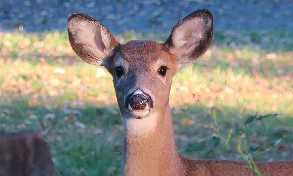 Oh Deer! by april16