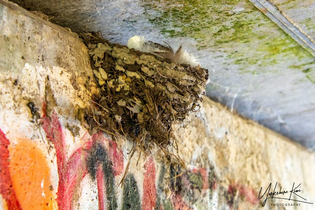 Swallow's Nest by yorkshirekiwi