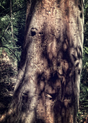 18th Sep 2018 - tree trunk 1 - goblin