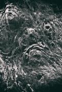 19th Sep 2018 - tree trunk 2 - Grumpy
