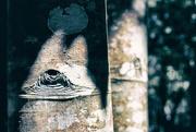 20th Sep 2018 - tree trunk 3 - chameleon