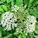 Mystery flower.  Can anyone identify this flower?  It reminds me of Queen Ann's lace.