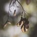 veins by pistache