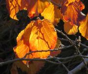 25th Oct 2018 - Autumn's Bright Colors