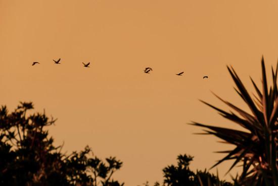 Flyby by salza