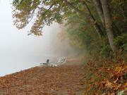 26th Oct 2018 - Foggy Trail